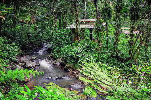 Tropical Rainforest by Joan McCool