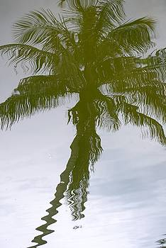 Tropical Reflection by Peter  McIntosh