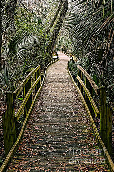 Tropical Walk by Susan Smith