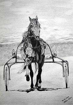 Trotter by Melita Safran