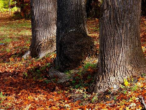 Trunk and Leaves by Joyce Kimble Smith