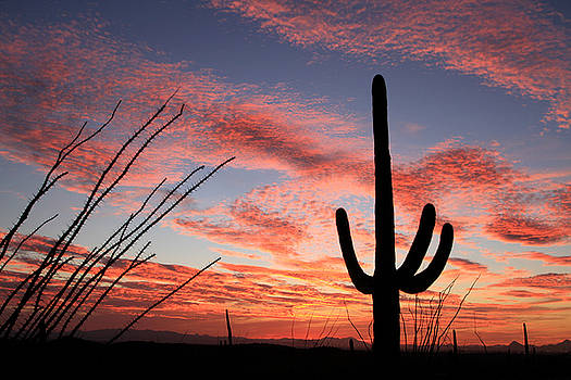 Tucson Sunset by Kathy Stanczak