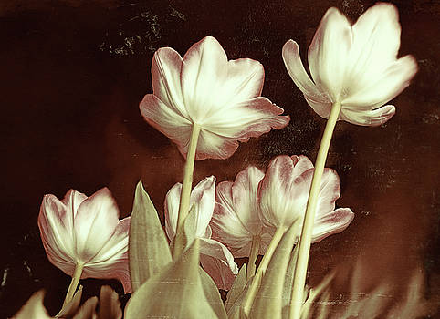 Tulip Backsides by Bonnie Willis
