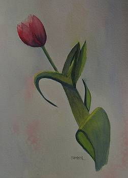 Tulip by David Bartsch