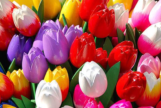 Tulip Explosion by Josephine Benevento-Johnston