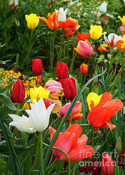 Tulip Field 10 by Rudi Prott