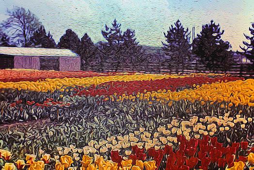 Cindy Boyd - Tulip Fields Holland 1971