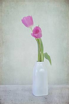 Tulip Love by Kim Hojnacki