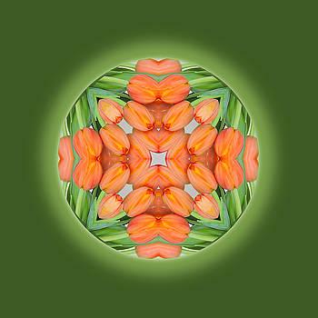 Tulip Mandala by Jorge Gomez