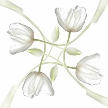 Tulip Maze by Richard Nodine