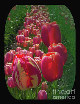 Tulip Row by Ansel Price