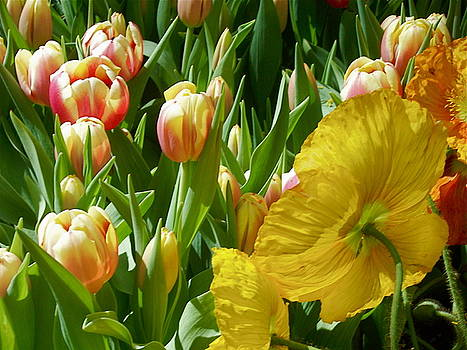 Tulips and Poppies 1 by Maria Mills