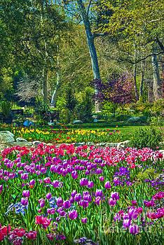 David Zanzinger - Tulips and Trees