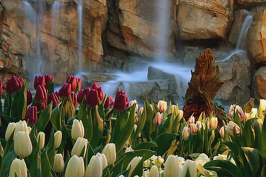 Tulips Episode 2 by Brad Walters