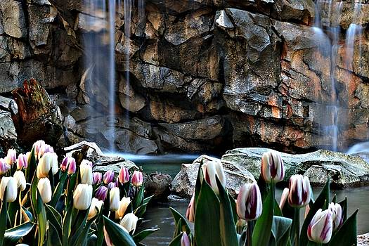 Tulips Episode 6 by Brad Walters
