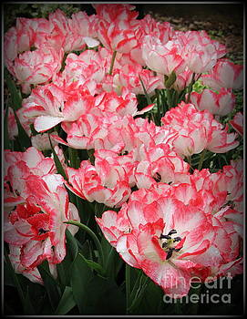 Tulips in Coral and White  by Dora Sofia Caputo Photographic Art and Design