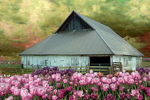 Tulips in Skagit Valley by Jeff Burgess