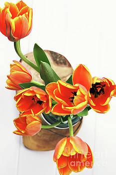 Tulips by Stephanie Frey