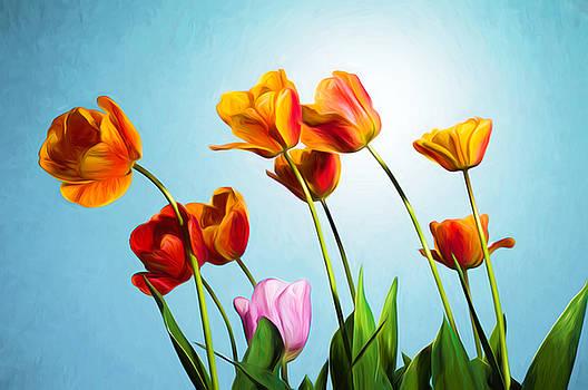 Tulips by Trevor Wintle