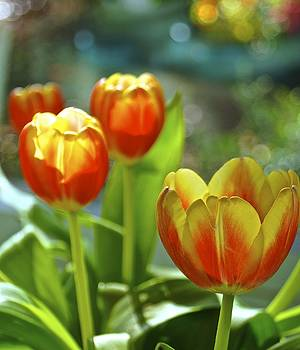 Tulips by Wendell Lowe