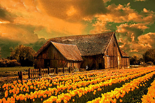 Tulips with barn2 by Jeff Burgess