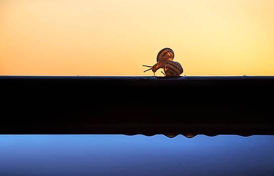 Turbo by Ivan Vukelic