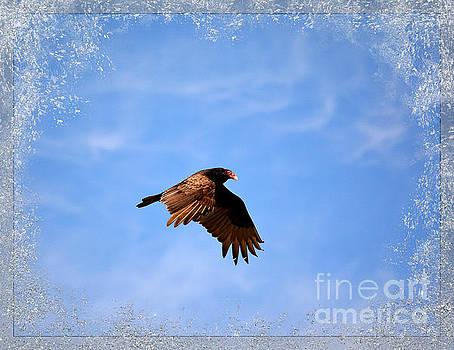 Turkey Vulture by Brenda Bostic