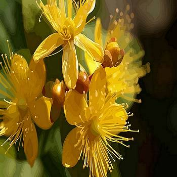Tracey Harrington-Simpson - Turkish St Johns Wort Wild Flower Vector Image
