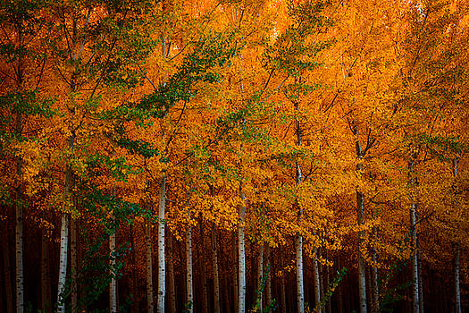 Turning into Gold by Dan Mihai