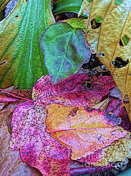 Turning Leaves by Todd Breitling