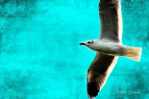 Turquoise Ocean Seagull by Barbara Chichester