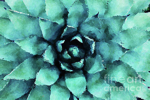 Turquoise Succulent Plant by Phil Perkins
