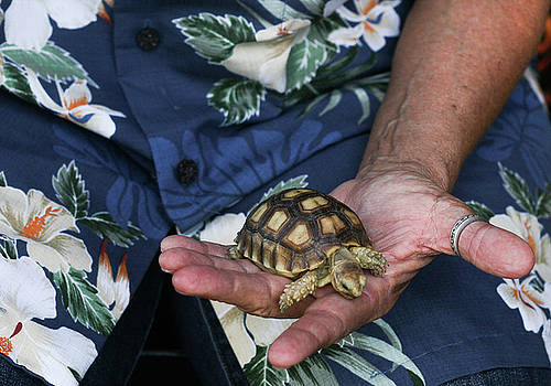 Turtle in the hand. by Melodie Douglas