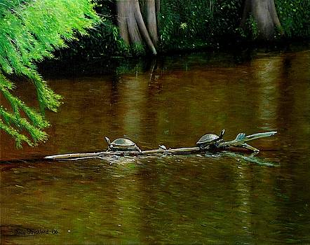 Turtle Log Spa by Doug Strickland
