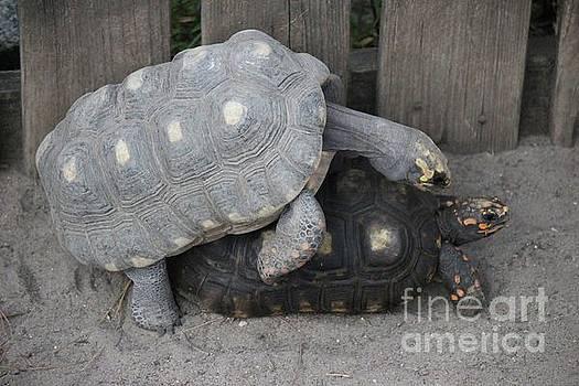 Paulette Thomas - Turtle Loving