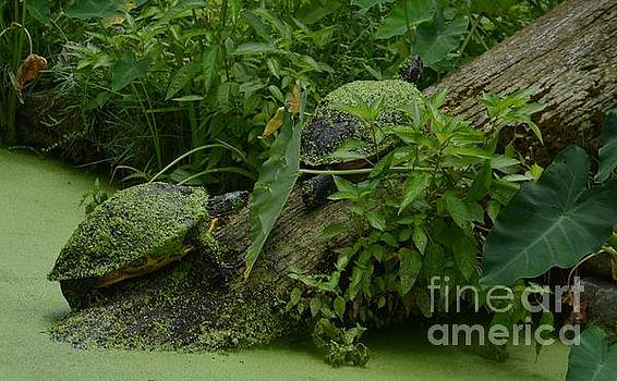 Turtles by Janice Spivey