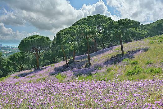 Tuscan Impression by Joachim G Pinkawa