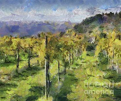 Tuscan Vineyards by Dragica Micki Fortuna