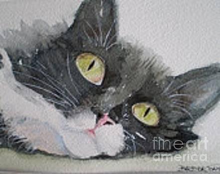 Tuxedo Cat by Barbra Joan