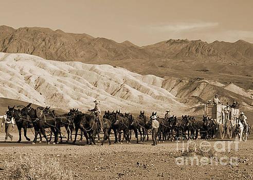 Twenty Mule Team by Ivete Basso Photography