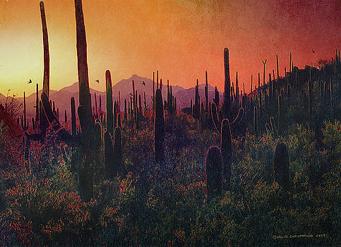 Twilight In Saguaro National Park by R christopher Vest