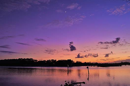 Twilight on Rose Bay by Julianne Felton