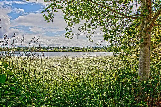 Twin Cities Summer Breeze by Matthew Bamberg