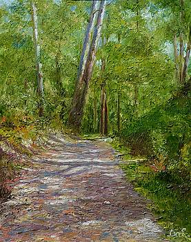 Twin gumtrees in the Lane Cove National Park by Dai Wynn