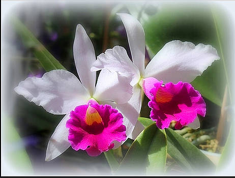 Twin Orchids by Donald Hill