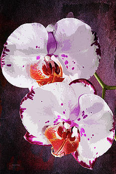 Twin Orchids Painterly by Phyllis Denton