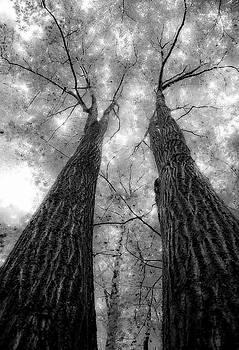 Twins by Antonio Gruttadauria