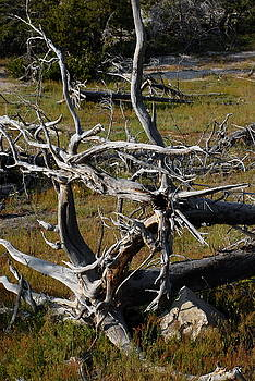 Twisted Roots by Rich Caperton