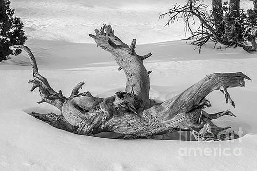 Twisted by Sue Smith