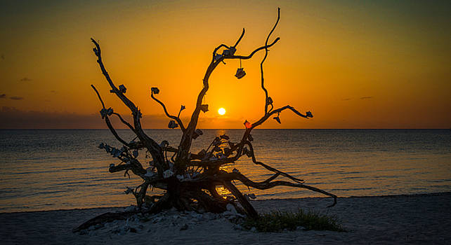 Twisted Sunset by Phil Abrams